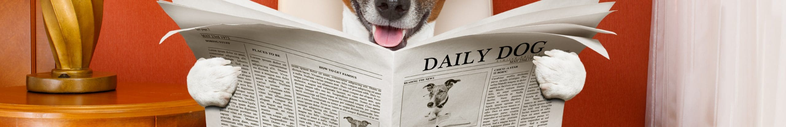 Un chien lit un journal